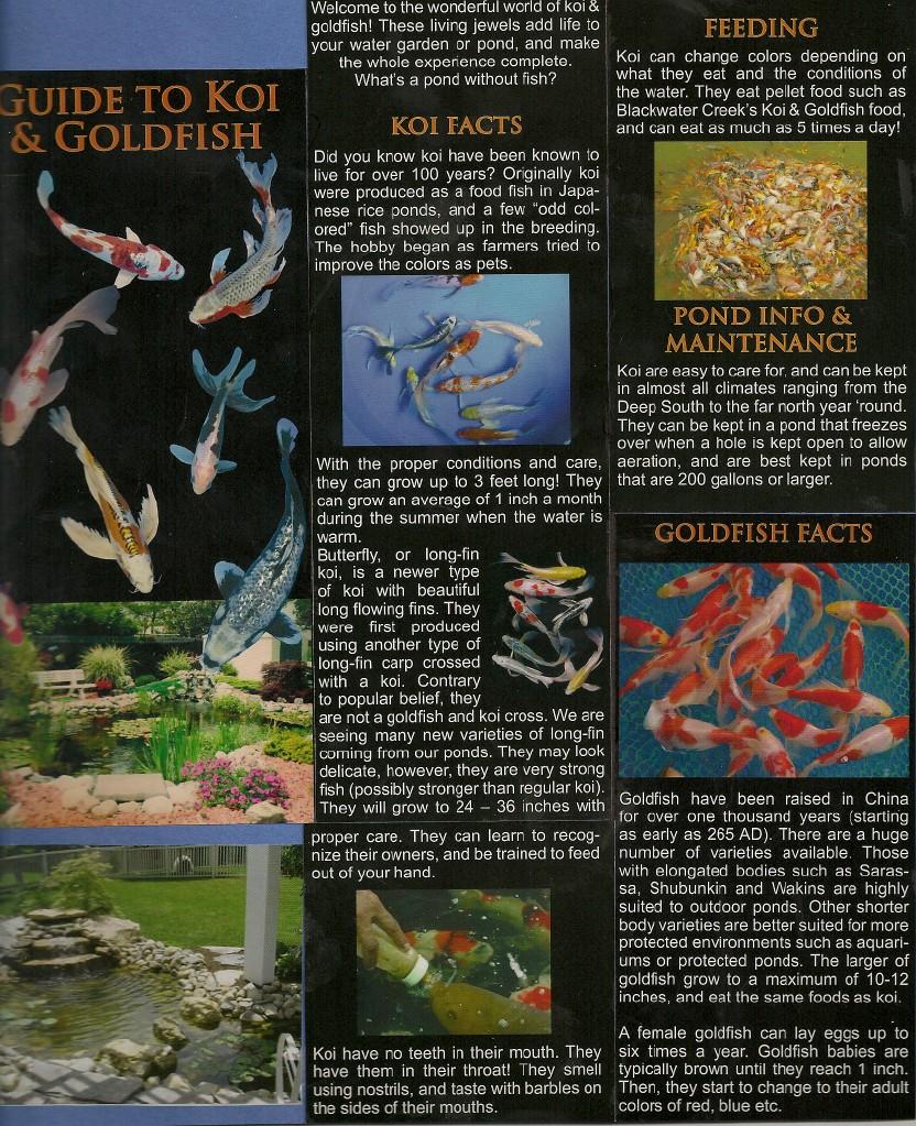 Goldfish & Koi