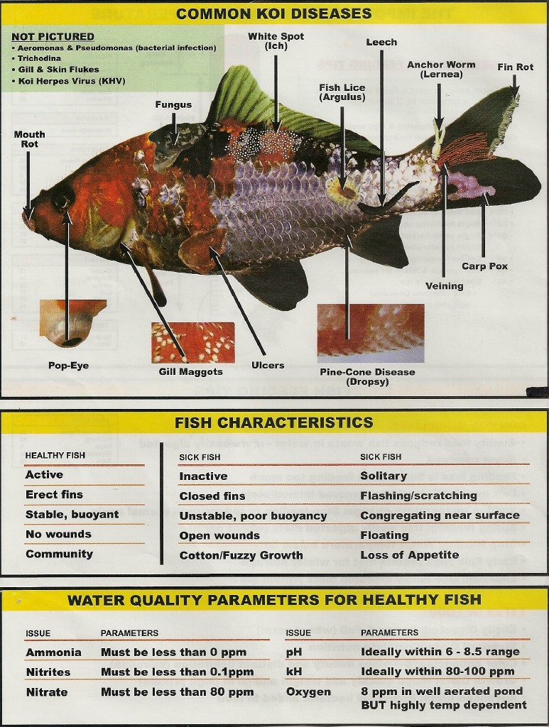 Fish tips for Fish diseases pictures